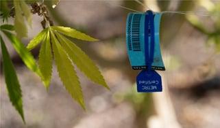 Flourish_WhatisMetrc_SeedtoSale_Cannabis