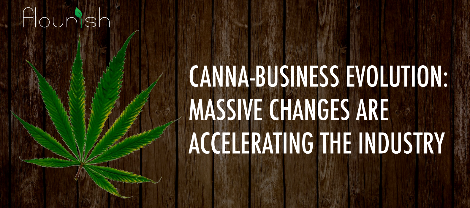 canna-business evolution