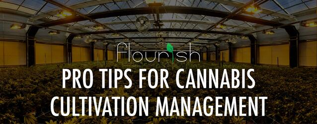 pro_tips_for_cannabis_cultivation_management.jpg