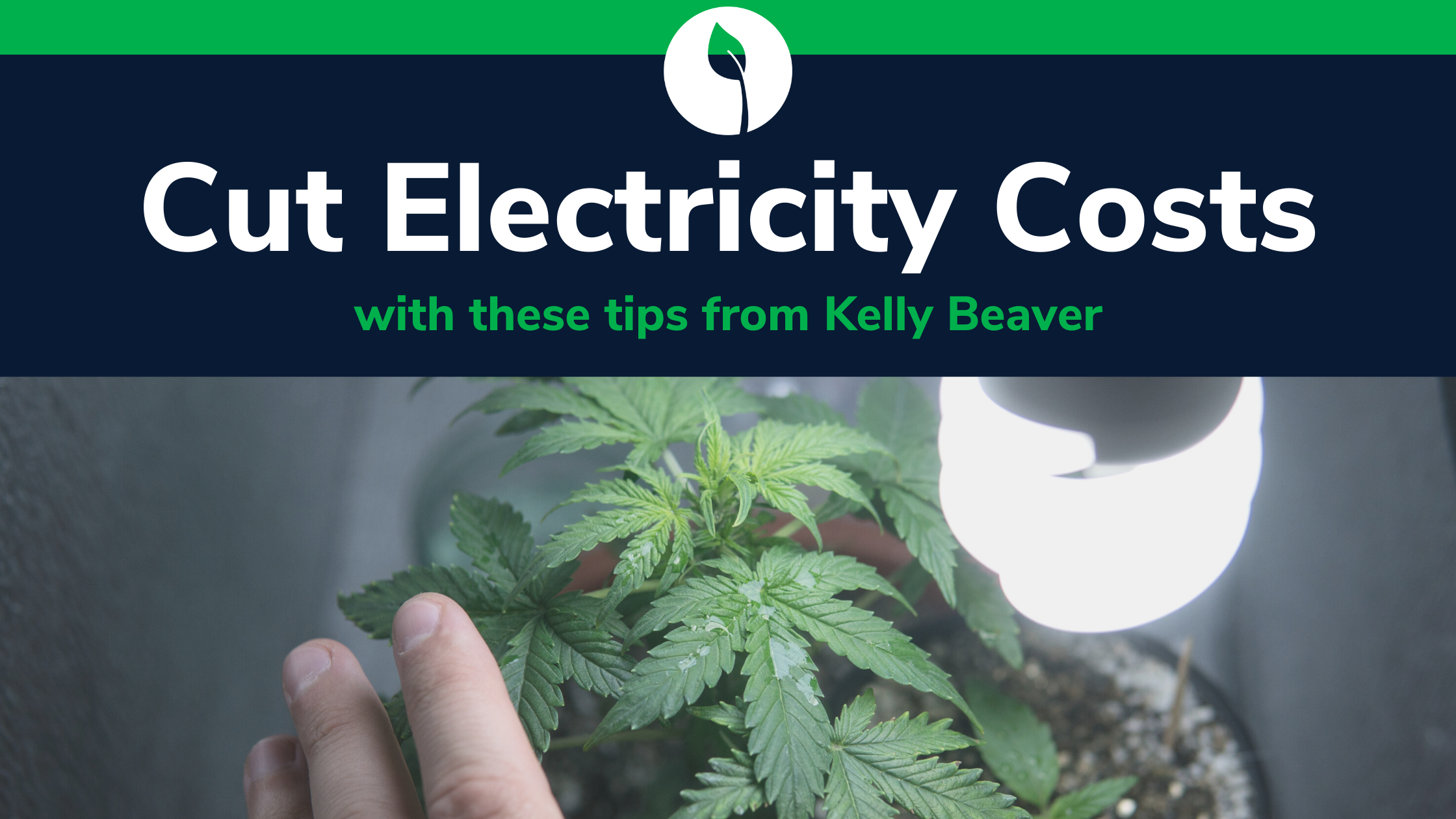 save money on lighting and electricity with your indoor cannabis grow