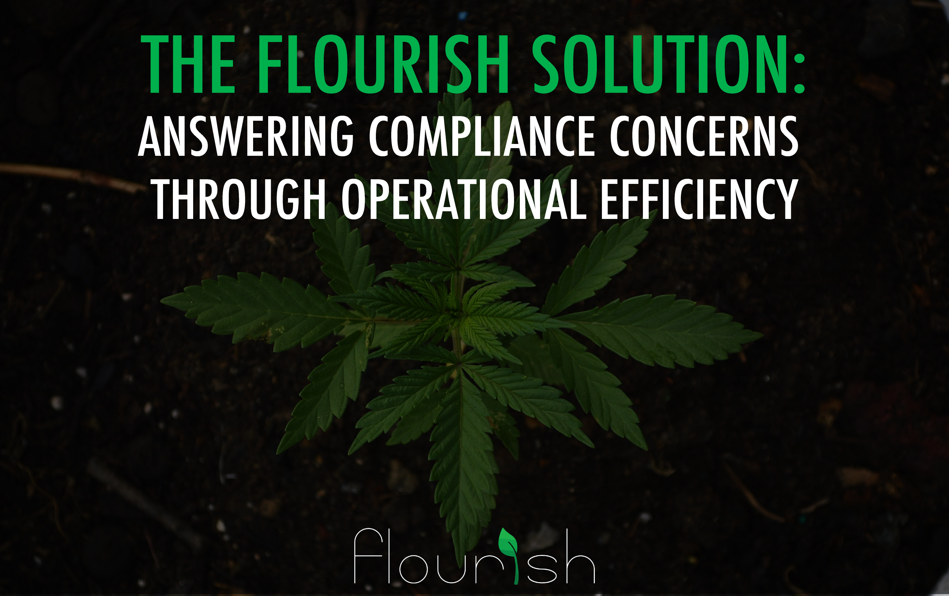 the flourish solution